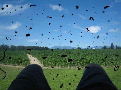 mosche volanti mosche volanti o floaters un fastidioso e comune
