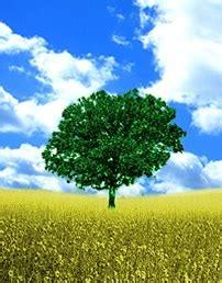 Tali Rami 100m albero cura dei fiori delle piante d appartamento e