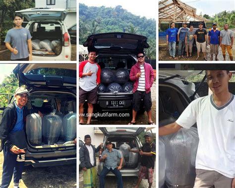 Jual Bibit Ikan Lele Di Cirebon jual bibit lele sangkuriang di cirebon hub 08111041161