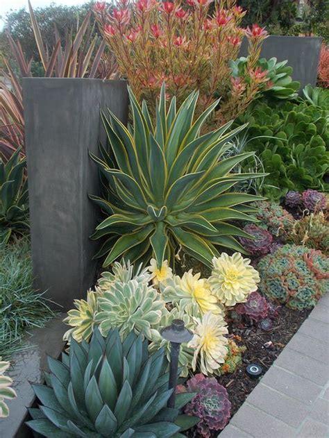 gardening landscaping with succulents low water use