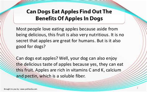 can dogs eat spam can dogs eat apples find out the benefits of apples in dogs