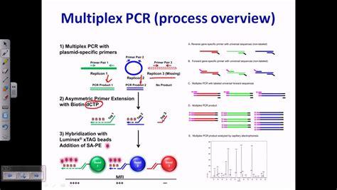 multiplex definition multiplex pcr