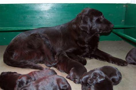 addestramento cani pavia diamante allevamento cani addestratore cani