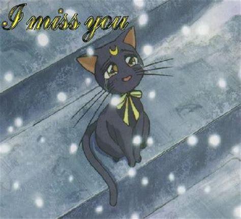 anime cat   myniceprofilecom