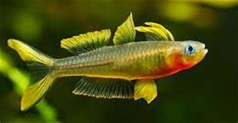 Tetra Betta By Iwak Ku Aquarium joe s aquaworld for fishes mumbai india 9833898901