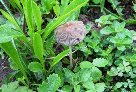 Bei Uns Wachsen Pilze Im Garten by Guckt Mal Was Bei Mir Im Garten W 228 Chst Sammelthread
