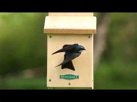 duncraft s swallow bird house 2107 flv youtube