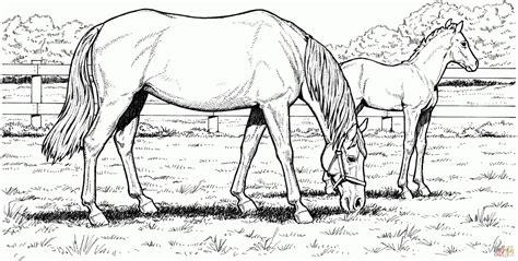 coloring pages of appaloosa horses appaloosa horse coloring page coloring page art
