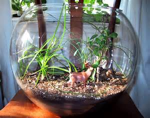 how to make your own terrarium deer terrarium inhabitat