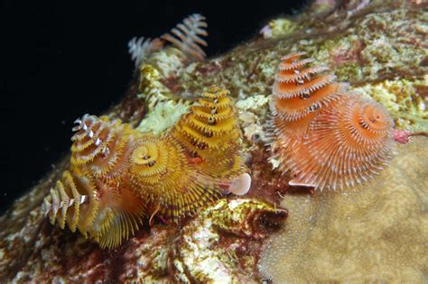 quot holidays under the sea quot marine science today