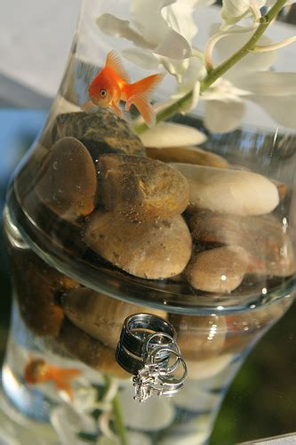 Water Bowl Decoration by Goldfish Bowls As Centerpieces For Your Wedding
