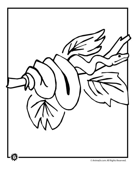 coloring pages for animals in rainforest coloring home