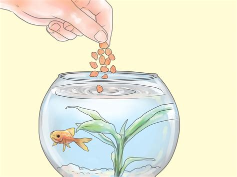 draw your home how to keep bass and other american gamefish in your home