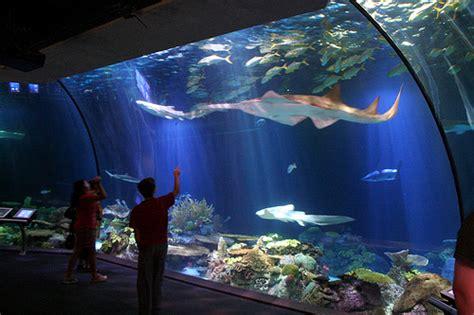 Water Aquarium Besar Ancol Theme Park Tour City Tour Jakarta