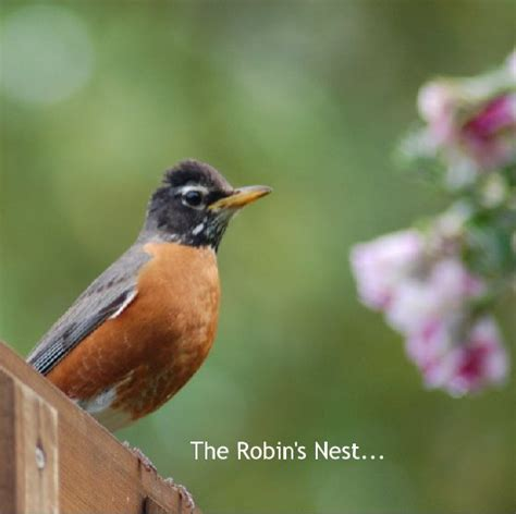 the robin s nest by wendy jukich arts photography