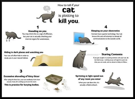 how to tell a is how to tell if your cat is plotting to kill you imghumour