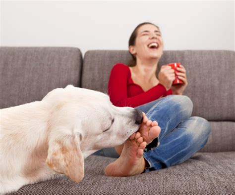 why does my dog lick the couch dog licking the toes wide open pets