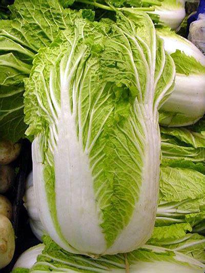 plant id vegetables chinese cabbage florida master gardener volunteer program university