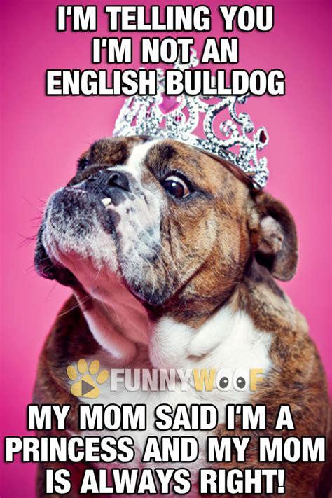 Dog Mom Meme - dog mom meme 28 images laughter is the best medicine a
