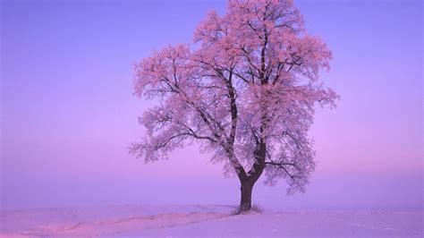 wallpaper pink trees pink tree wallpaper 32007