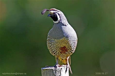 the backyard wildbird and nature store nanaimo vancouver