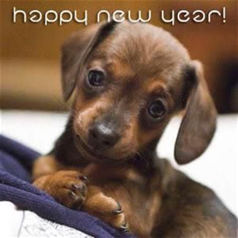 happy new year puppy happy new year doggies