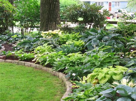 Landscape Ideas With Hostas Hosta Gardens Smalltowndjs
