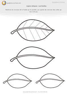 section 481 a graphisme ms lignes obliques les nervures des feuilles
