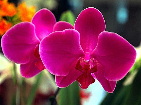 imagenes a flores dicas para melhorar o cultivo de orqu 237 deas flores