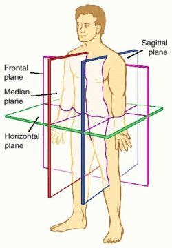 define section anatomy sagittal planes definition of sagittal planes by medical