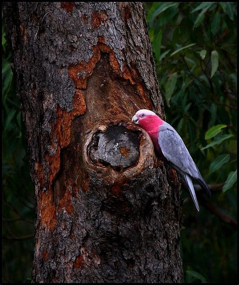 treknature bird pecking bark photo