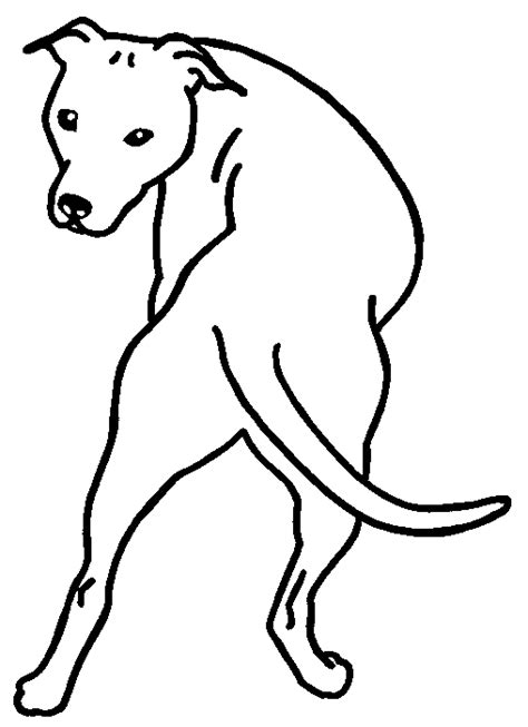 blue nose pitbull coloring pages coloring pages