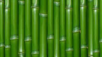 download green bamboo wallpaper 1920x1080 wallpoper 389757