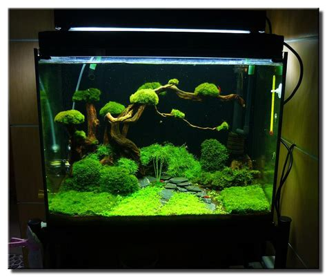 Aquascaping Ideas For Planted Tank by Aquariums On Planted Aquarium Aquascaping And