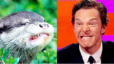 Benedict Cumberbatch Otter Meme - benedict cumberbatch reenacts otter memes barnorama