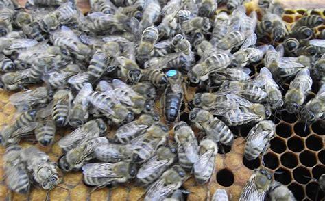 Was Ist Eine Sauna by Was Ist Eine Bienen Sauna Wasserburger Stimme
