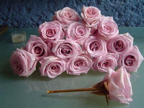 imagenes de flores bonitas para portada rosas y flores hermosas im 225 genes taringa