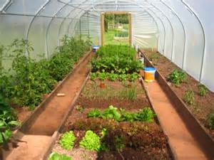 Self Water Planter the poly tunnel first year jealous secret garden