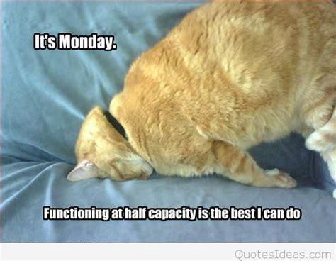 i it s monday but cat it s monday quote