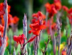 Wie Lange Halten Schnittblumen by Wie Halten Gladiolen L 228 Nger Tipps F 252 R Die Schnittblume