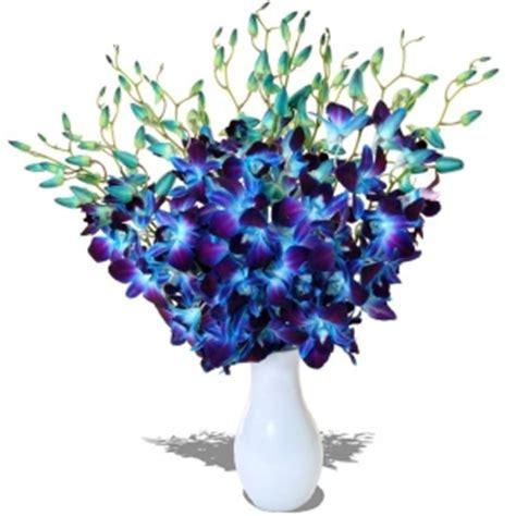 Vase Wholesale Uk Dendrobium Galaxy Blue Orchids