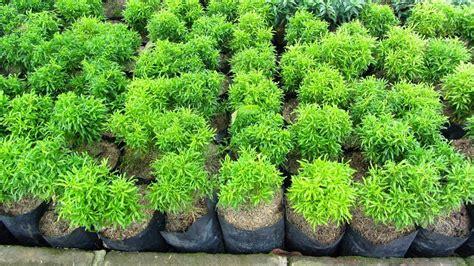tanaman hias daun jasa tukang pembuatan taman  kolam