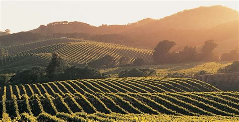 napa valley vacation travel guide   information aarp