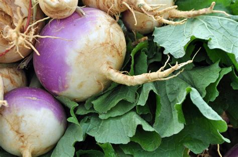 turnip greens health benefits uses and possible risks