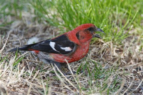 birds we see more of and fewer of in kansas the