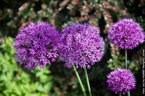 Pflegeleichte Gartenpflanzen by Pflegeleichte Gartenpflanzen Im Fr 252 Hling