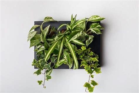 pannelli per giardini verticali pannelli per giardini verticali hoh singolo livingdeco