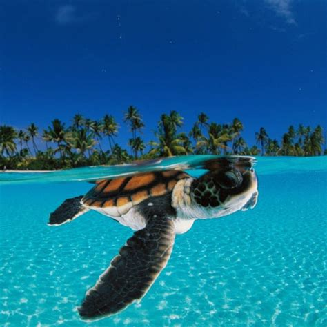 imagenes de paisajes con animales paisajes y animales paisajesyanimal twitter