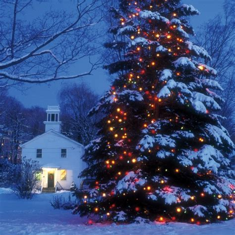 Let There Be Lights Martha Stewart Large Outdoor Tree Lights