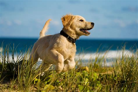 houses that allow dogs pet friendly hotels in ireland 30 purr fect places to stay independent ie